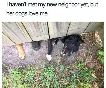 Dog - I haven't met my new neighbor yet, but her dogs love me