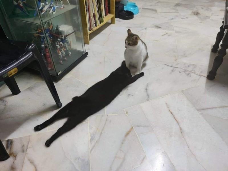 Cat - berat