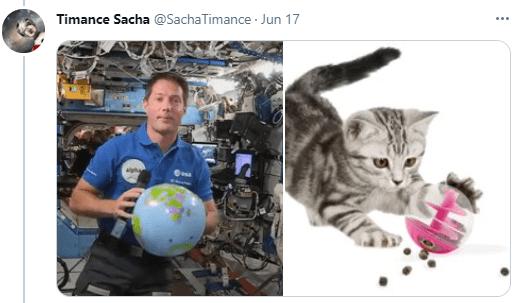 Cat - Timance Sacha @SachaTimance Jun 17 ...