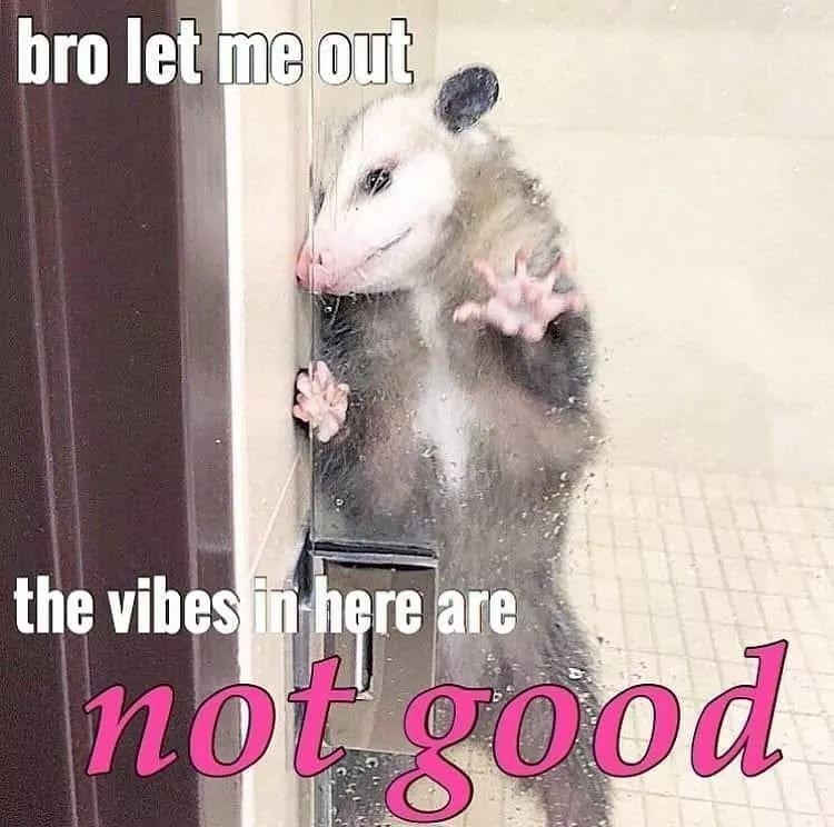 white footed mice - bro let me out the vibes in here are not good 00