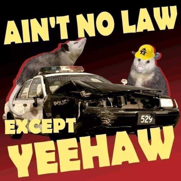 Car - AIN'T NO LAW COliviasOmemeOu EXCEPT 529 YEEHAW