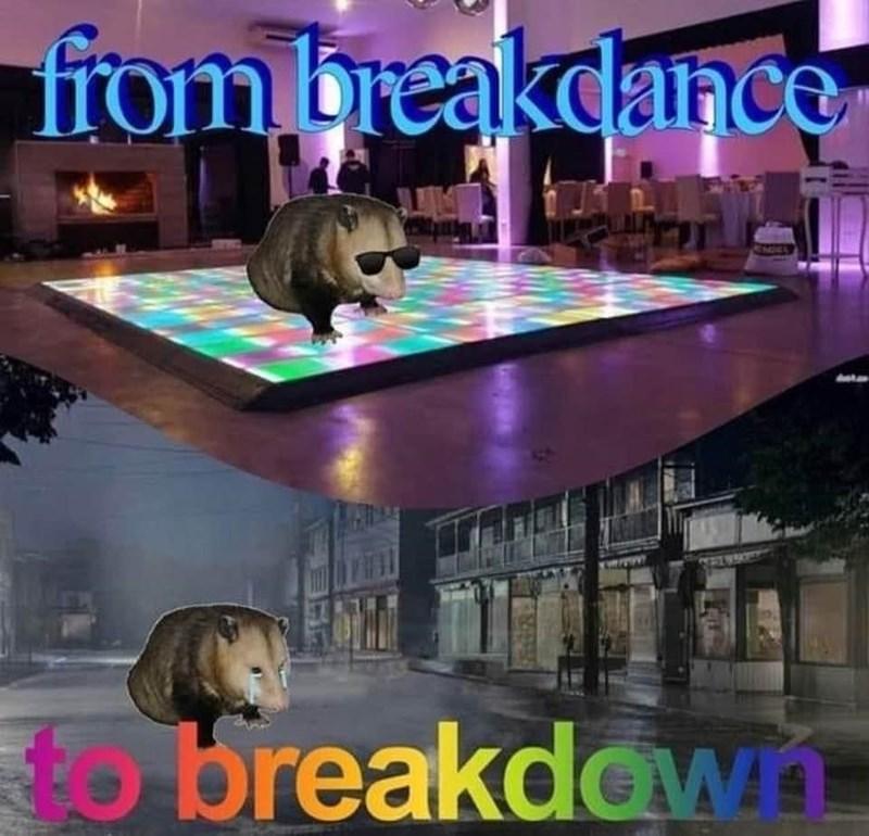 Vertebrate - from breakdance to breakdown