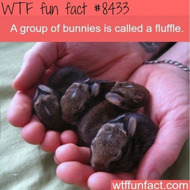 Hand - WTF fun fact #8433 A group of bunnies is called a fluffle. wtffunfact.com