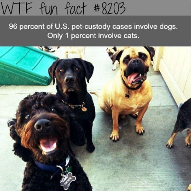 Dog - WTF fun fact #8203 96 percent of U.S. pet-custody cases involve dogs. Only 1 percent involve cats.