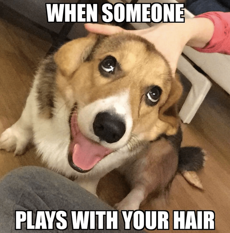 Dog - WHEN SOMEONE PLAYS WITH YOUR HAIR