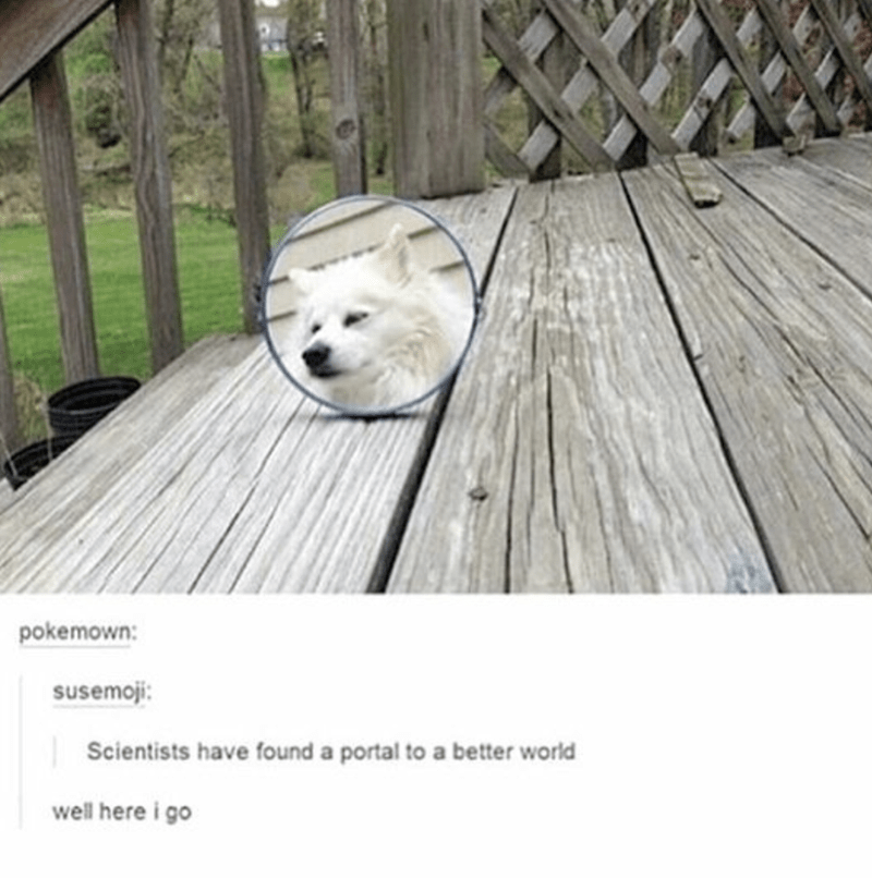 Dog - pokemown: susemoji: Scientists have found a portal to a better world well here i go