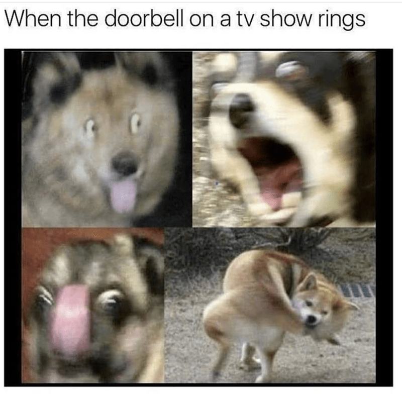 Nose - When the doorbell on a tv show rings