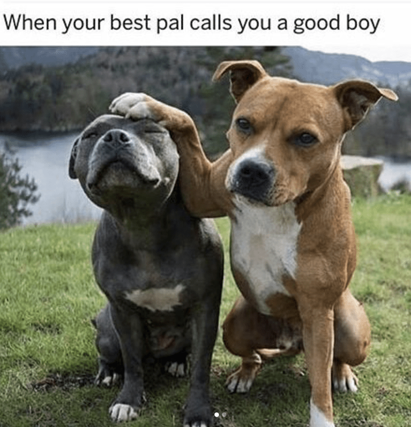 Dog - When your best pal calls you a good boy