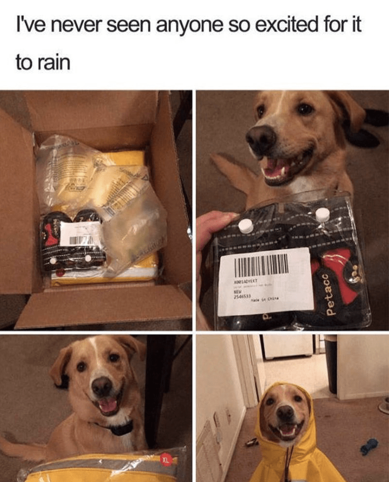 Dog - I've never seen anyone so excited for it to rain NEM 2546533 ale CAL XL Petacc