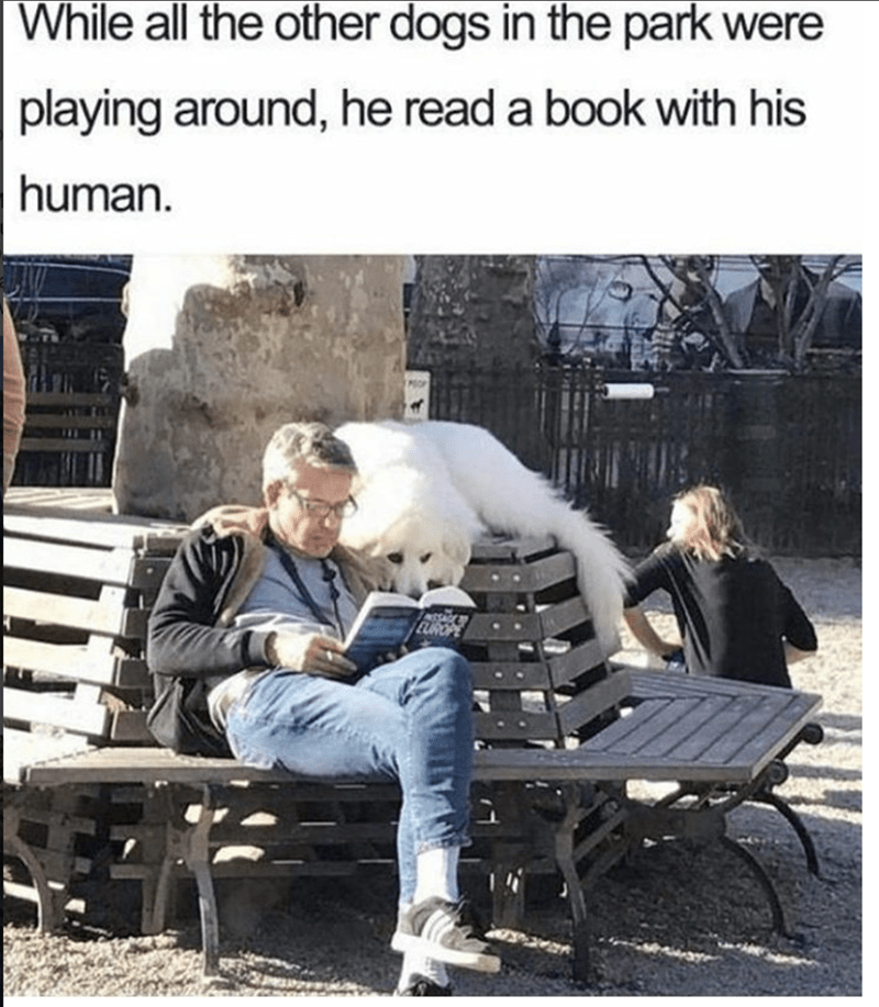 Human - While all the other dogs in the park were playing around, he read a book with his human.