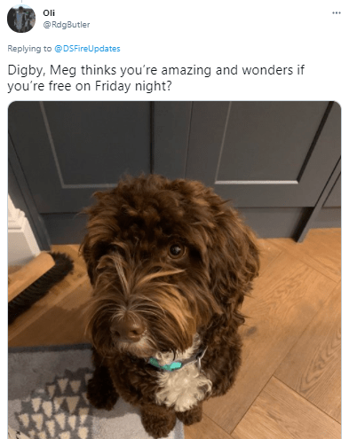 Dog - Oli @ RdgButler Replying to @DSFireUpdates Digby, Meg thinks you're amazing and wonders if you're free on Friday night?