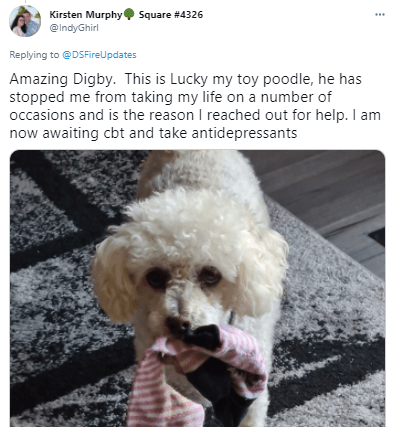 Dog - Kirsten Murphy Square #4326 @IndyGhirl ... Replying to @DSFireUpdates Amazing Digby. This is Lucky my toy poodle, he has stopped me from taking my life on a number of occasions and is the reason I reached out for help. I am now awaiting cbt and take antidepressants