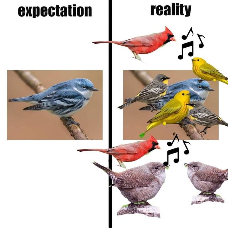 Bird - expectation reality so