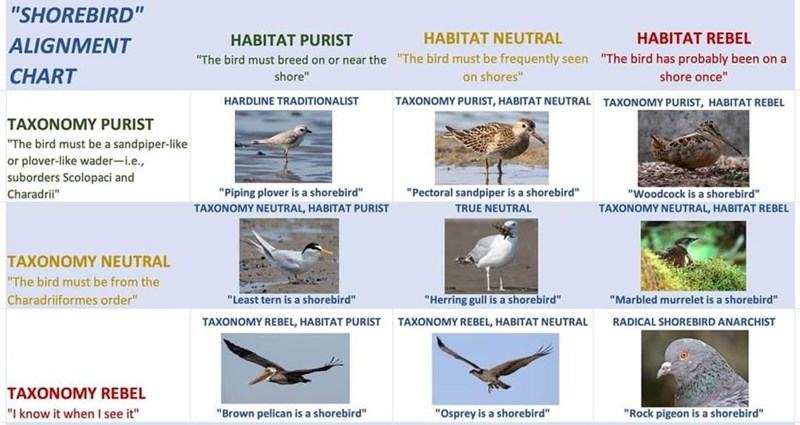 """Bird - """"SHOREBIRD"""" ALIGNMENT HABITAT PURIST HABITAT NEUTRAL HABITAT REBEL CHART """"The bird must breed on or near the """"The bird must be frequently seen """"The bird has probably been on a on shores"""" shore"""" shore once"""" HARDLINE TRADITIONALIST TAXONOMY PURIST, HABITAT NEUTRAL TAXONOMY PURIST, HABITAT REBEL TAXONOMY PURIST """"The bird must be a sandpiper-like or plover-like wader-i.e., suborders Scolopaci and Charadrii"""" """"Piping plover is a shorebird"""" """"Pectoral sandpiper is a shorebird"""" """"Woodcock is a shor"""