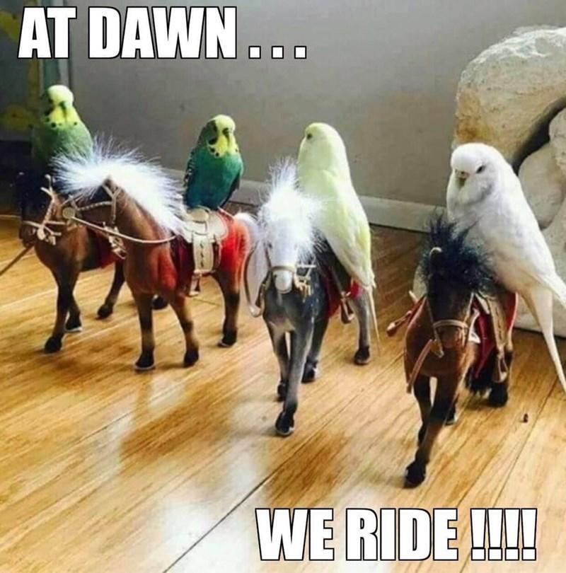 Horse - AT DAWN... WE RIDE !!!