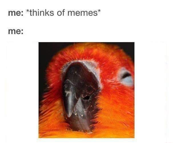 Organism - me: *thinks of memes* me: