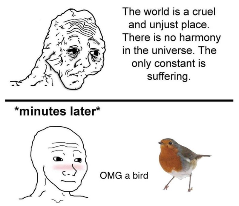 Nose - The world is a cruel and unjust place. There is no harmony in the universe. The only constant is suffering. *minutes later* OMG a bird