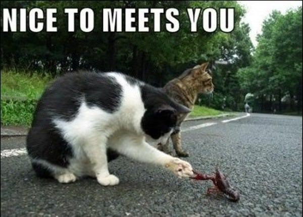 Cat - NICE TO MEETS YOU