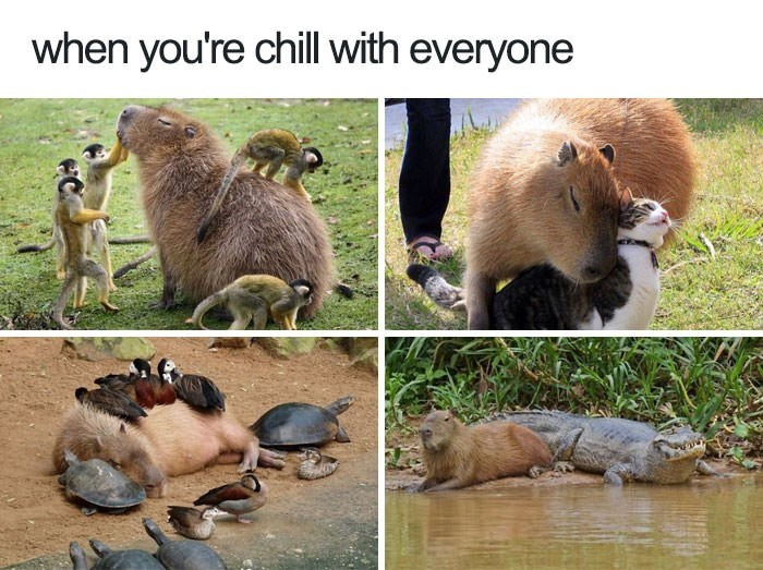 Water - when you're chill with everyone