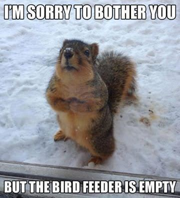Rodent - IM SORRY TO BOTHER YOU BUT THE BIRD FEEDER IS EMPTY