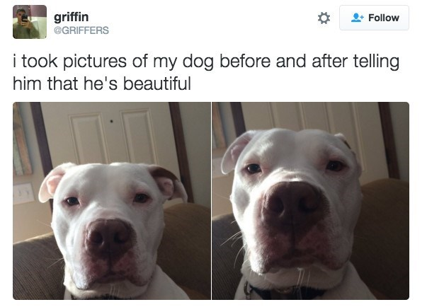 Dog - griffin Follow @GRIFFERS i took pictures of my dog before and after telling him that he's beautiful