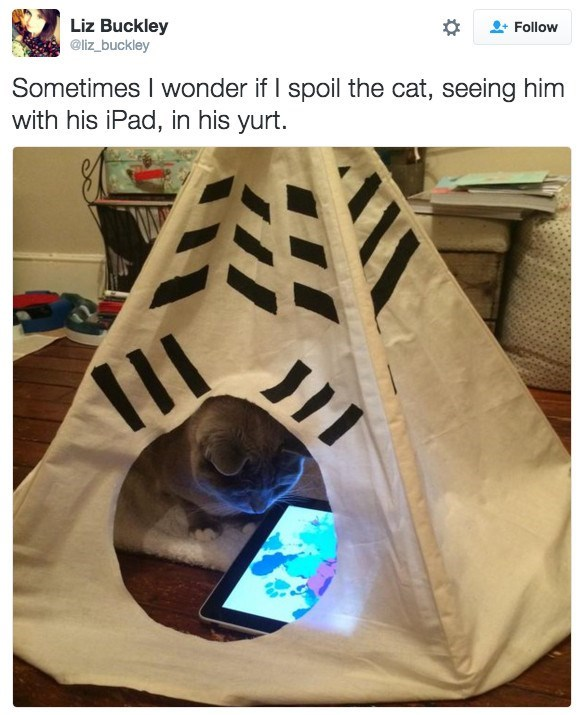 Photograph - Liz Buckley @liz_buckley Follow Sometimes I wonder if I spoil the cat, seeing him with his iPad, in his yurt.