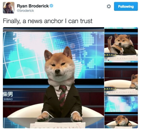 Dog - Ryan Broderick Following @broderick Finally, a news anchor I can trust 生活スター 生活スタート 柴男 SHIBAO