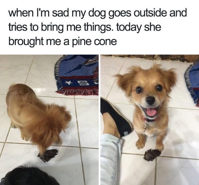 Dog - when I'm sad my dog goes outside and tries to bring me things. today she brought me a pine cone