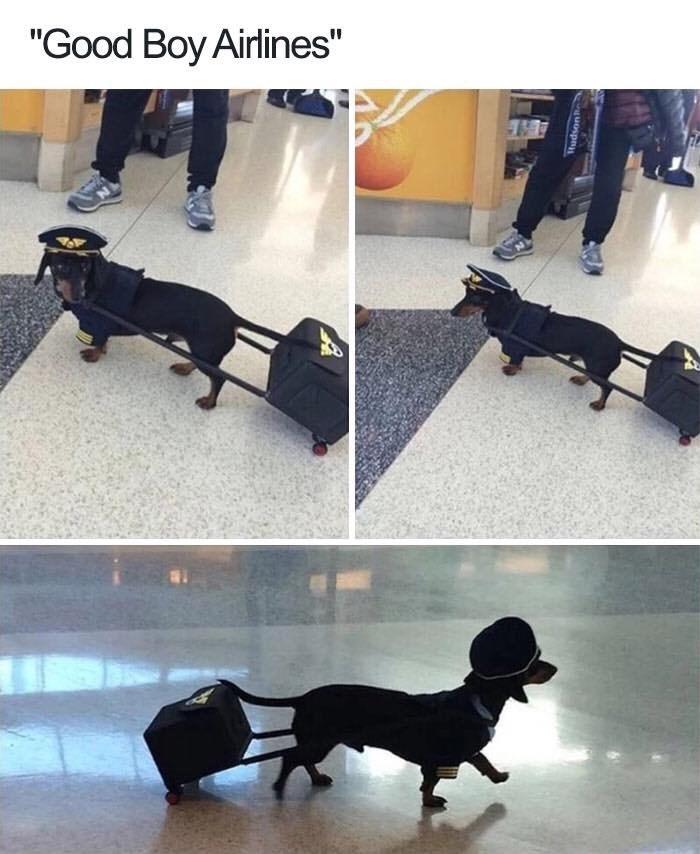"""Dog - """"Good Boy Airlines"""" uospn"""