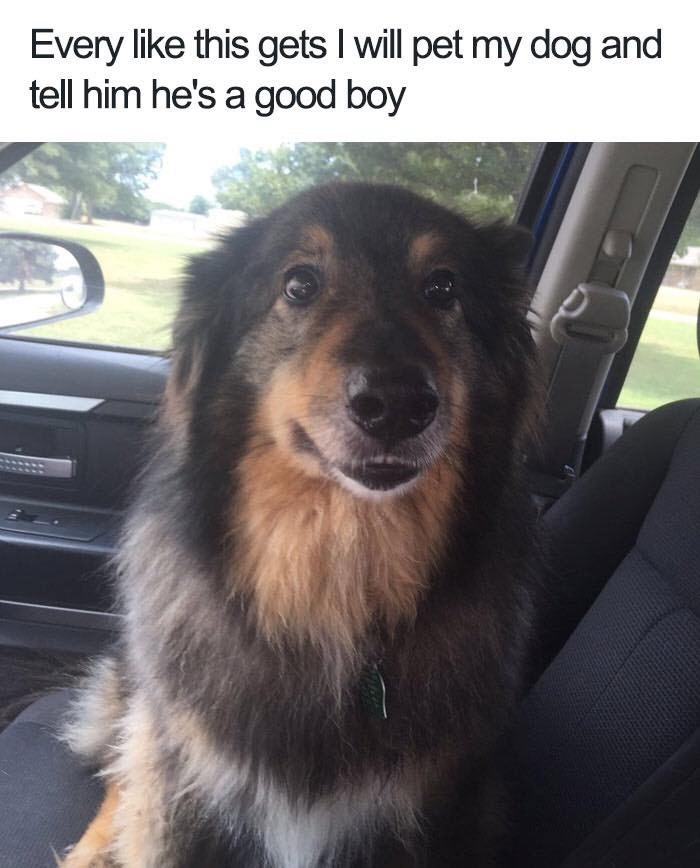 Dog - Every like this gets I will pet my dog and tell him he's a good boy