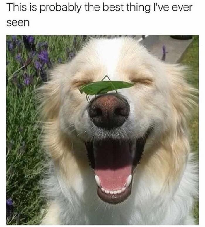 Dog - This is probably the best thing I've ever seen