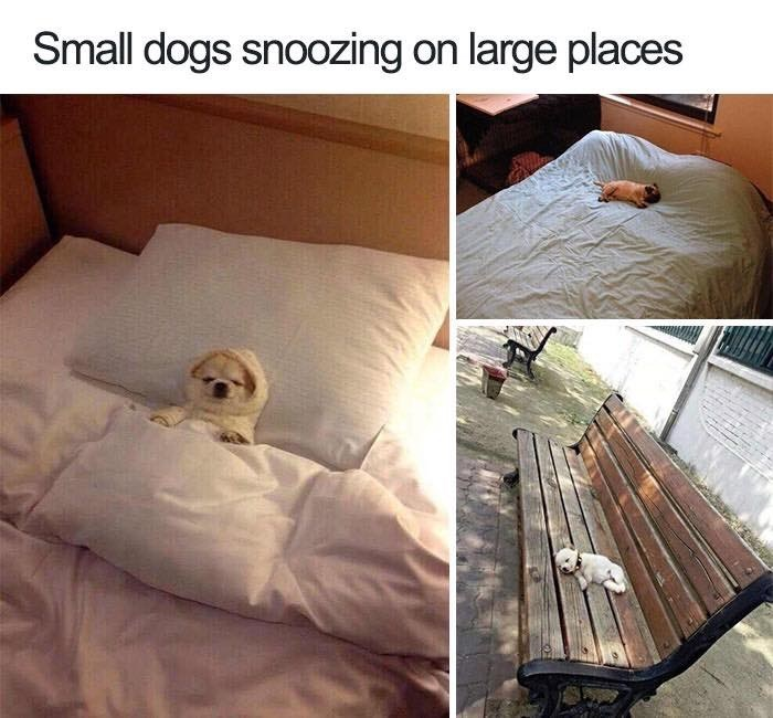 Furniture - Small dogs snoozing on large places