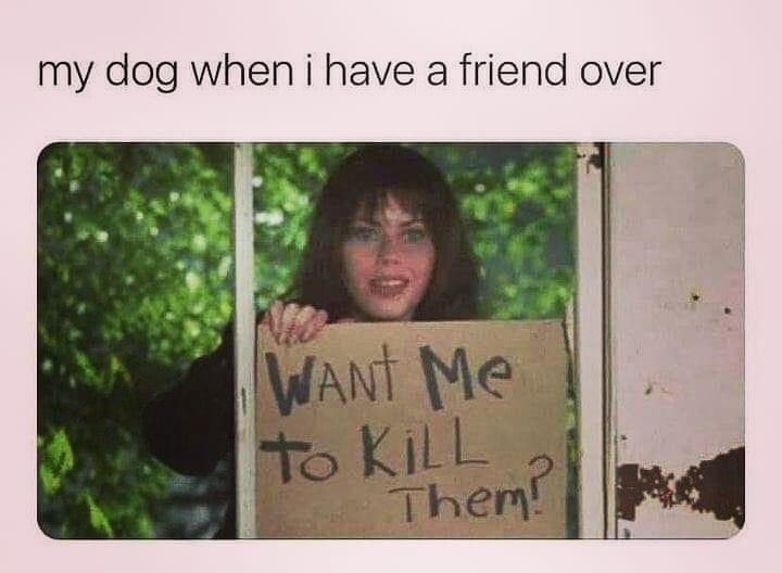 Smile - my dog wheni have a friend over WANT Me to KILL Them