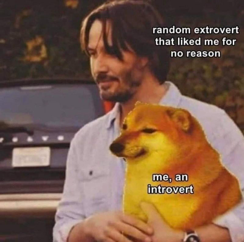 Dog - random extrovert that liked me for no reason me, an introvert
