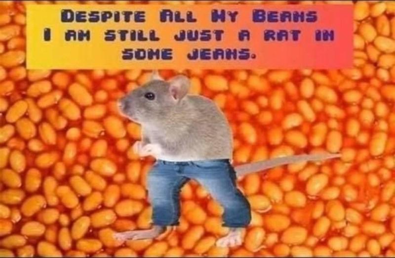 Vertebrate - DESPITE ALL HY BEAHS I AM STILL JUST A RAT IN SOME JEAHS.