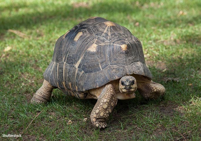 Reptile - Shutterstock