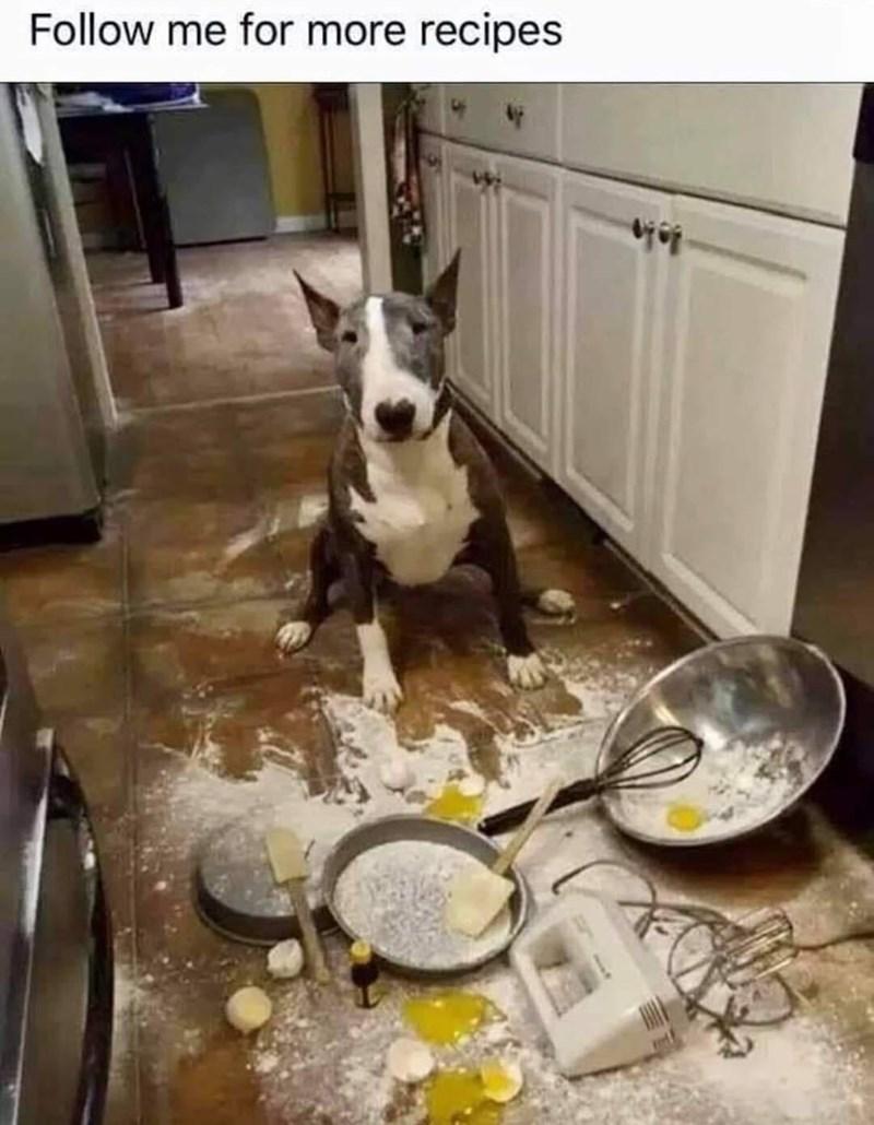 Dog - Follow me for more recipes