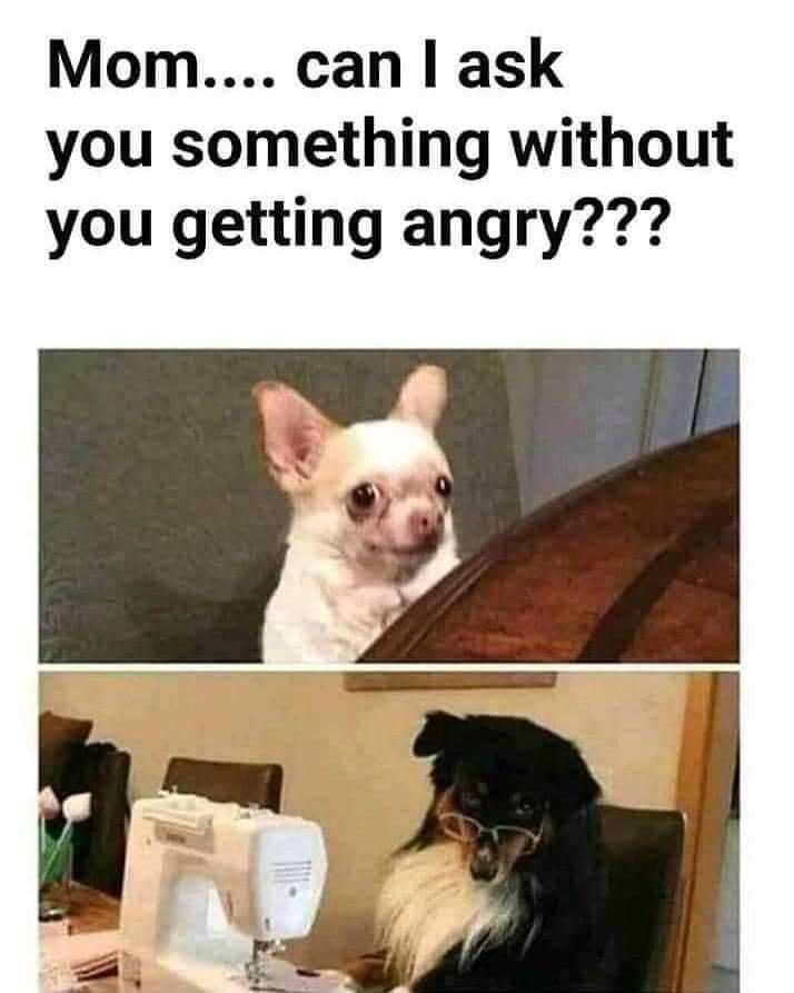Dog - Mom.... can I ask you something without you getting angry??? NEIN