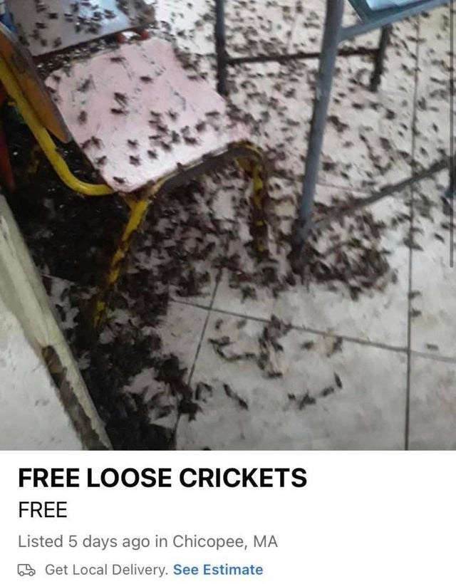 Chair - FREE LOOSE CRICKETS FREE Listed 5 days ago in Chicopee, MA 5 Get Local Delivery. See Estimate