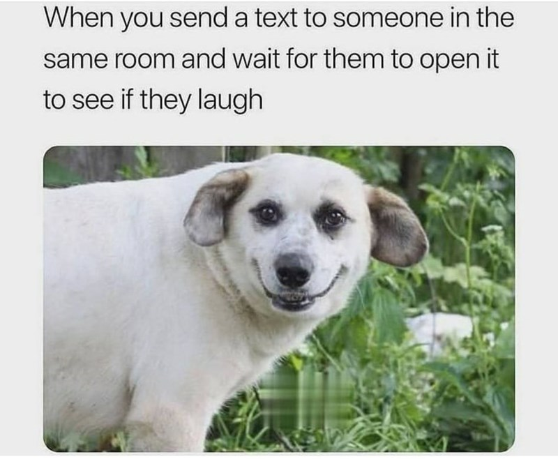 Dog - When you send a text to someone in the same room and wait for them to open it to see if they laugh