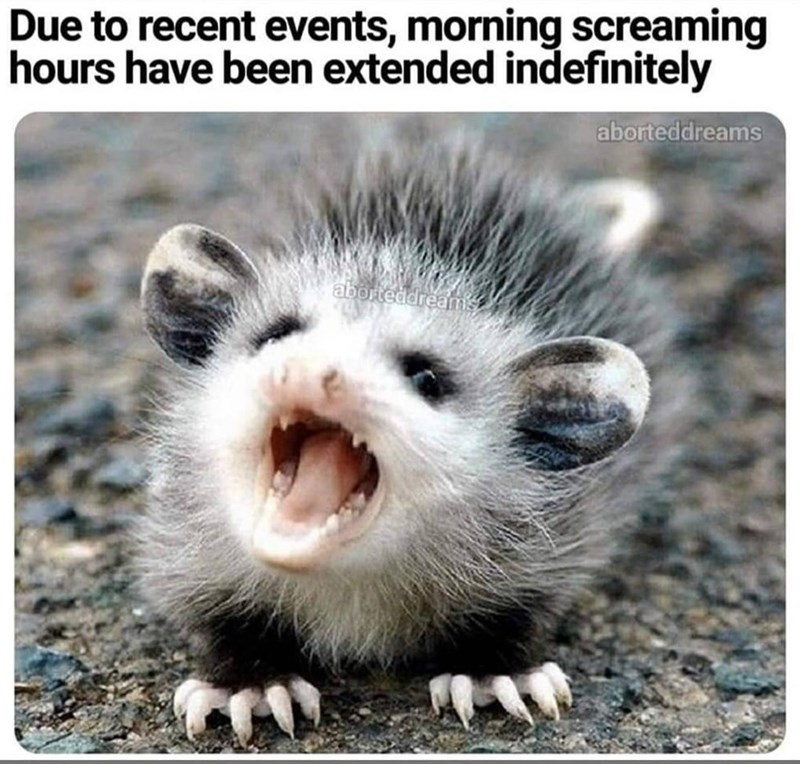 Ferret - Due to recent events, morning screaming hours have been extended indefinitely aborteddreams aborteddreams