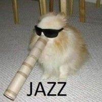 Dog breed - JAZZ