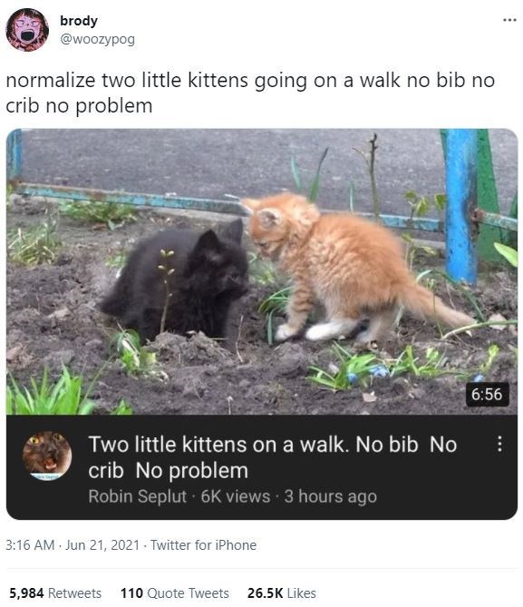 Cat - brody @woozypog normalize two little kittens going on a walk no bib no crib no problem 6:56 Two little kittens on a walk. No bib No crib No problem Robin Seplut 6K views 3 hours ago 3:16 AM Jun 21, 2021 - Twitter for iPhone 5,984 Retweets 110 Quote Tweets 26.5K Likes