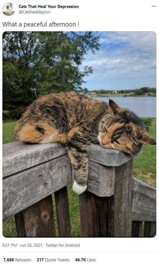 Cat - Cats That Heal Your Depression ... @Catshealdeprsn What a peaceful afternoon ! 6:51 PM - Jun 20, 2021 - Twitter for Android 7,688 Retweets 217 Quote Tweets 46.7K Likes