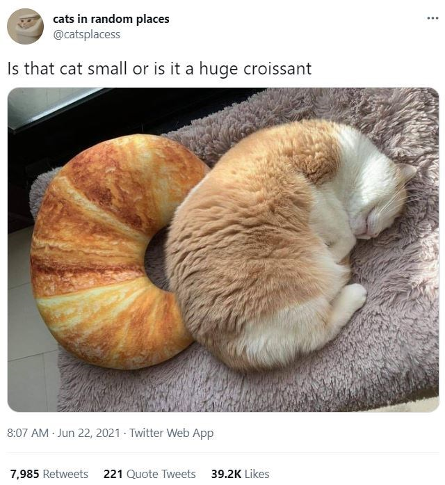 Organism - cats in random places @catsplacess ... Is that cat small or is it a huge croissant 8:07 AM Jun 22, 2021 Twitter Web App 7,985 Retweets 221 Quote Tweets 39.2K Likes