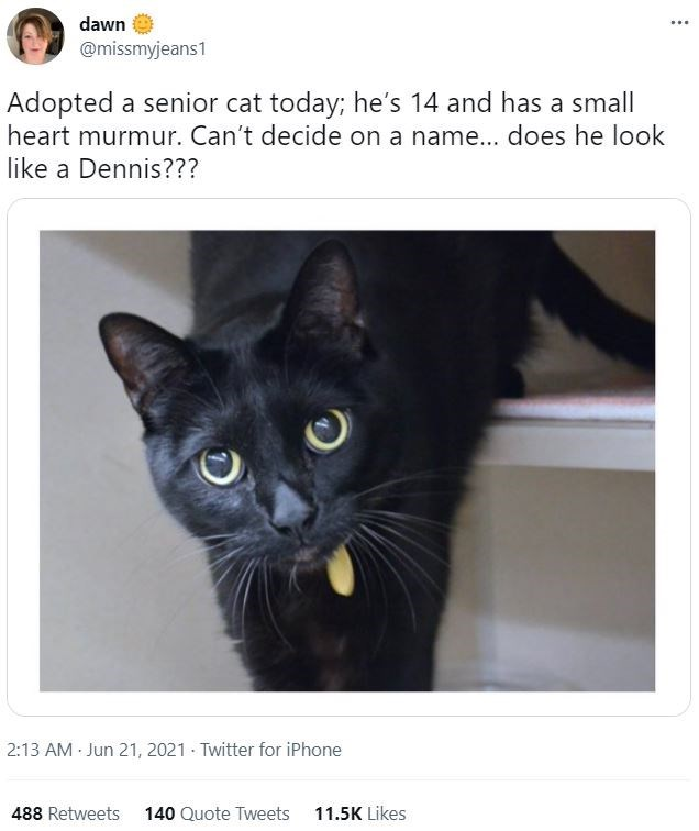 Cat - dawn ... @missmyjeans1 Adopted a senior cat today; he's 14 and has a small heart murmur. Can't decide on a name... does he look like a Dennis??? 2:13 AM - Jun 21, 2021 - Twitter for iPhone 488 Retweets 140 Quote Tweets 11.5K Likes