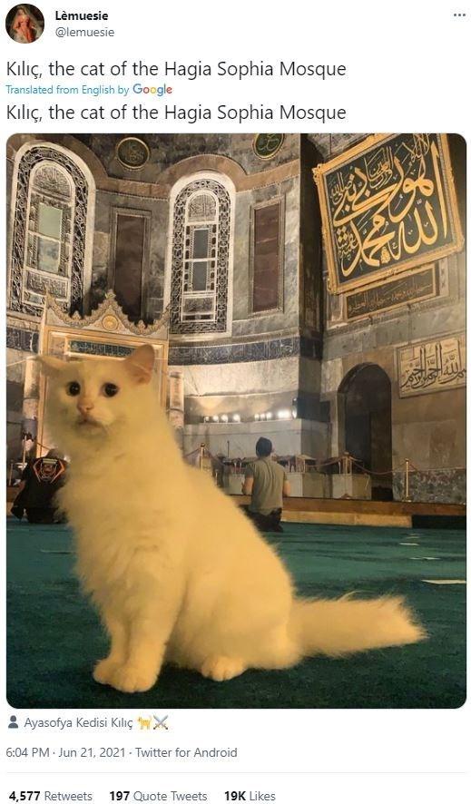 Felidae - Lèmuesie ... @lemuesie Kılıç, the cat of the Hagia Sophia Mosque Translated from English by Google Kılıç, the cat of the Hagia Sophia Mosque Ayasofya Kedisi Kılıç wX 6:04 PM Jun 21, 2021 - Twitter for Android 4,577 Retweets 197 Quote Tweets 19K Likes