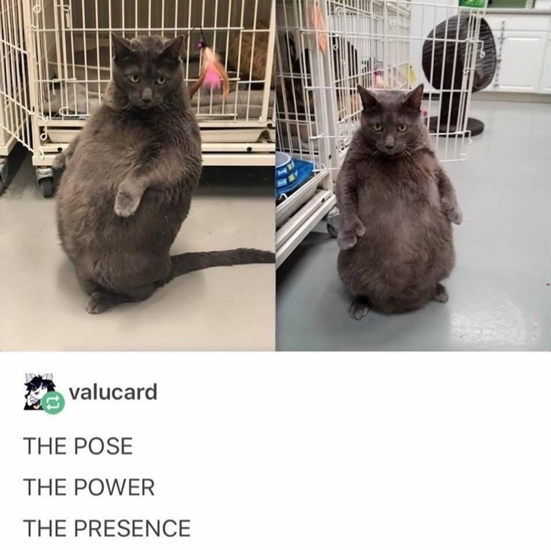 Cat - valucard THE POSE THE POWER THE PRESENCE
