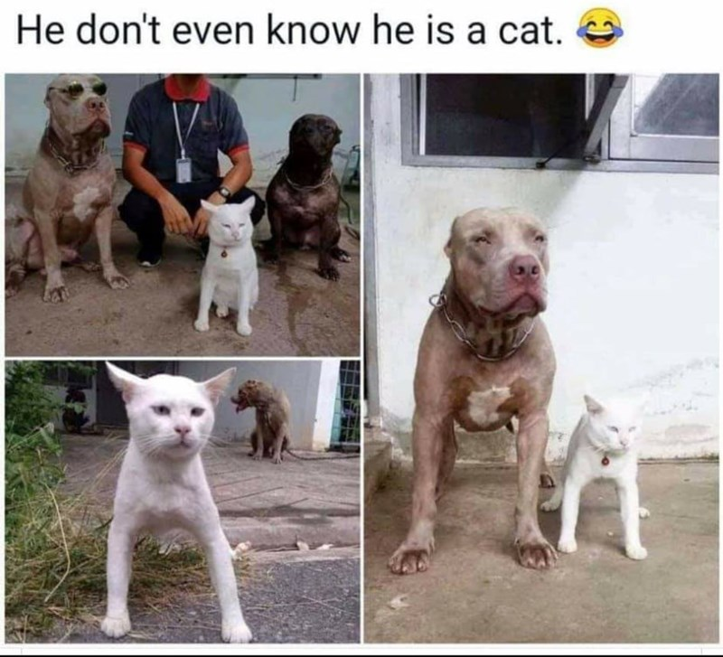 Dog - He don't even know he is a cat.