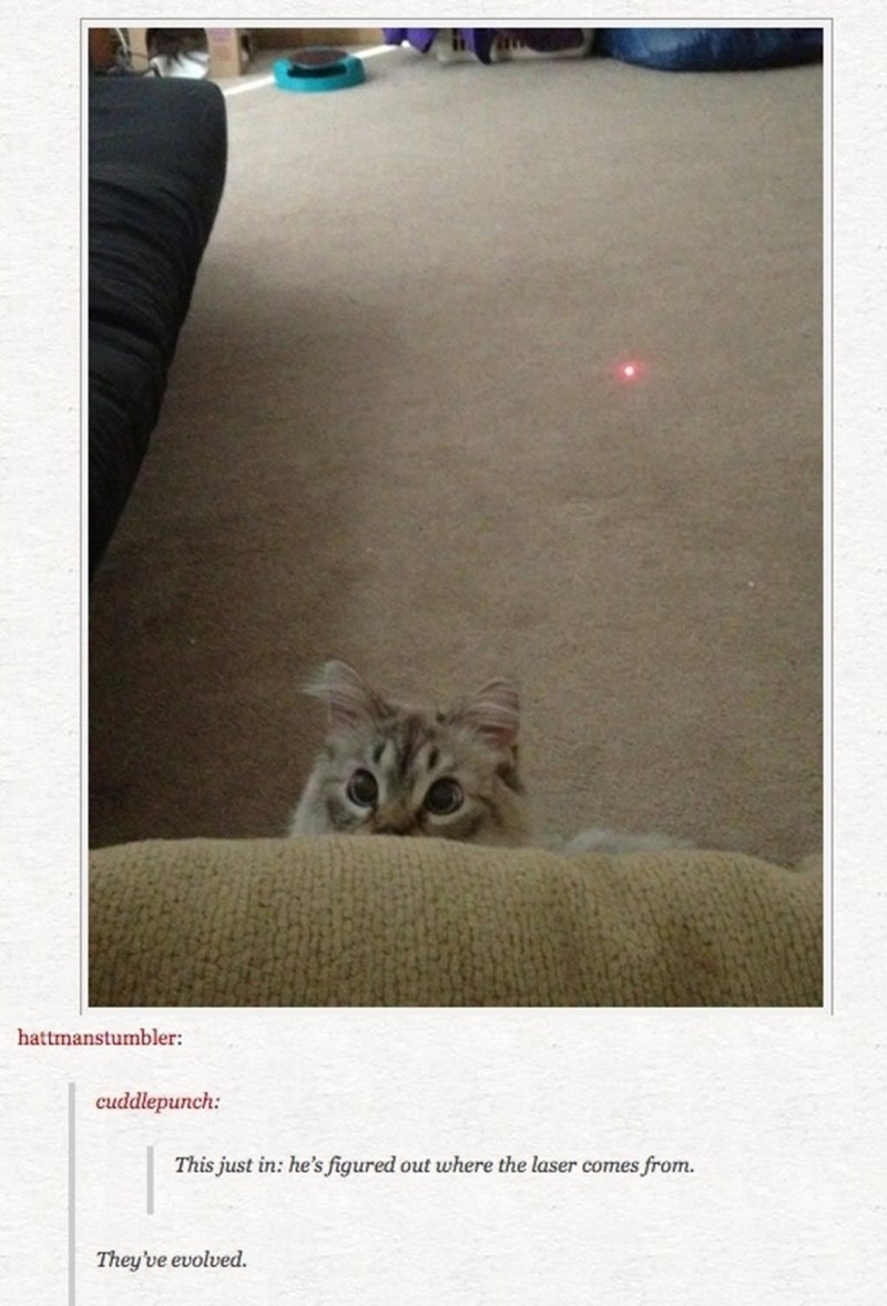 Cat - hattmanstumbler: cuddlepunch: This just in: he's figured out where the laser comes from. They've evolved.